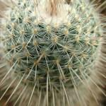 cactus-633827_1280